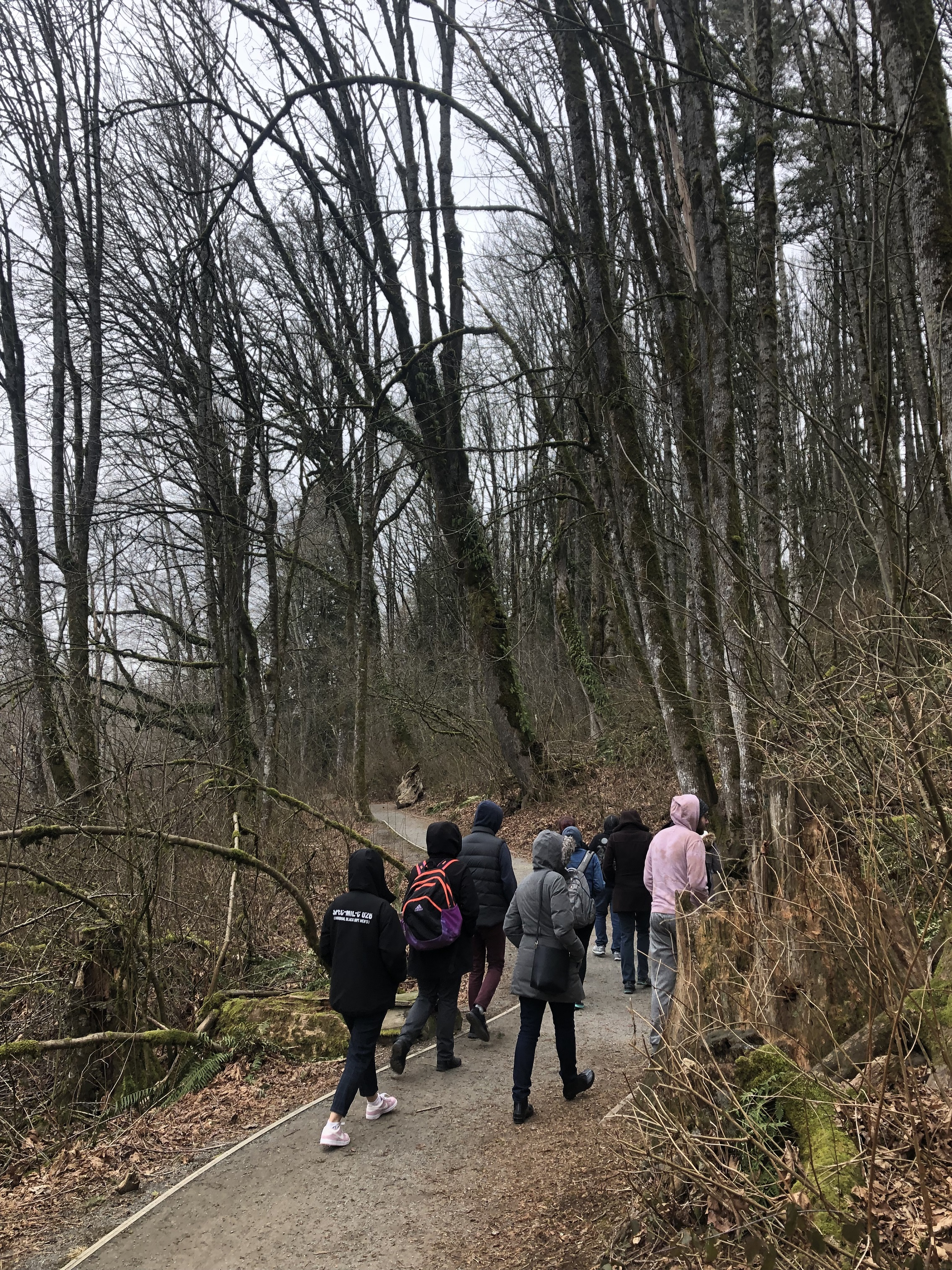 Kwantlen Polytechnic University fine arts students walk through the forest to understand historical landscapes.