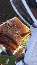 commercial beekeeping program